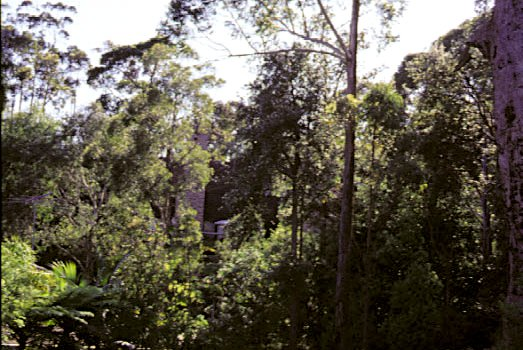 A suburban gully