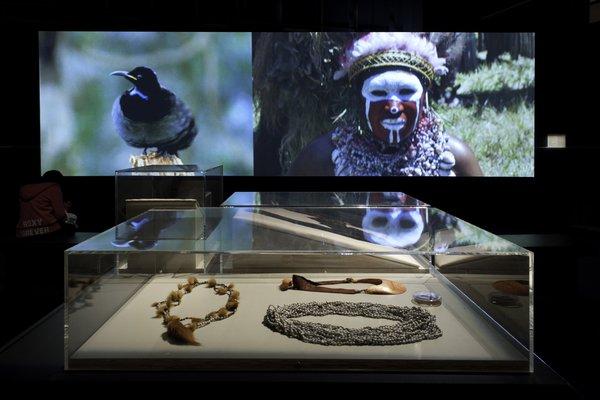 Rituals of Seduction: Birds of Paradise