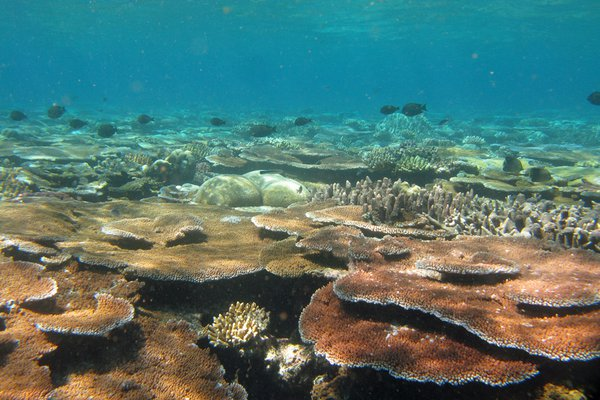 Life at Lizard: Waging war on the Crown-of-Thorns starfish