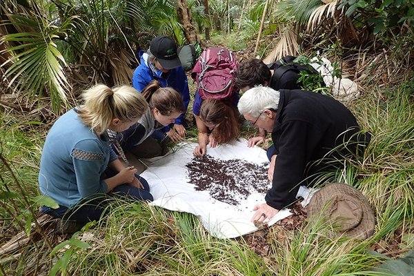 Chris Reid and citizen scientists looking at the contents of a sifter on Lord Howe Island, NSW