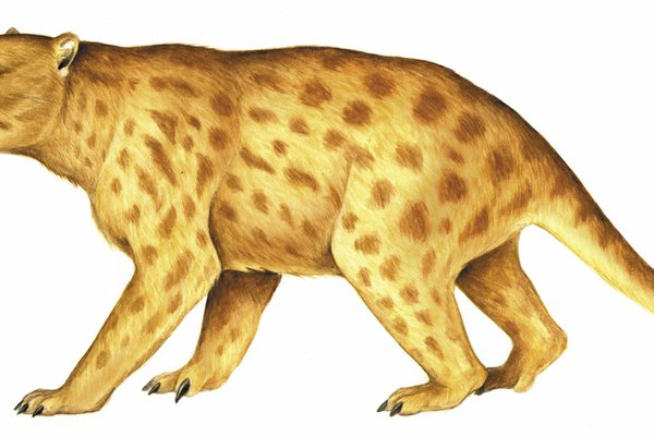 Thylacoleo