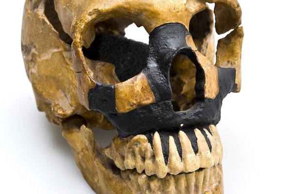 Skull of a Neanderthal youth