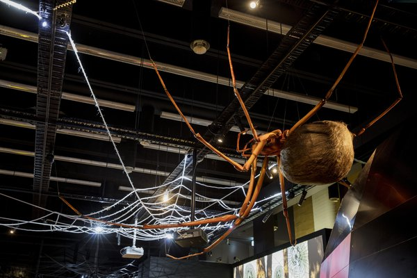 Spiders Exhibition Photograph Stock