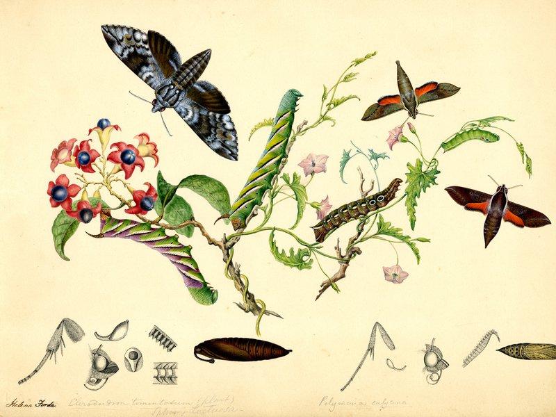 Scott Sisters illustrations
