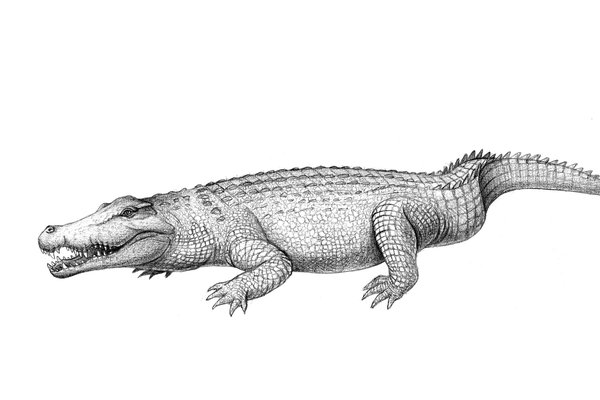 Australia's extinct crocodile, Baru darrowi