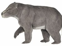 Australia's extinct animal, the Kolopsis