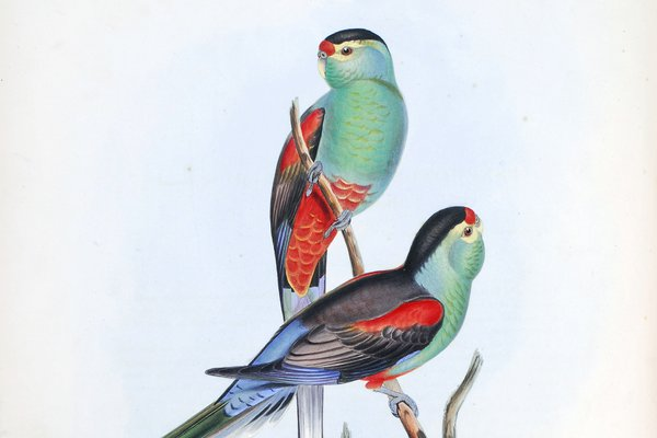 The Birds of Australia : in seven volumes / by John Gould.