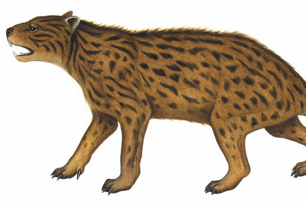 Australia's extinct animal, Wakaleo