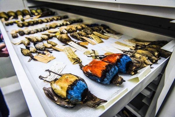 Ornithology Collection Area 2018