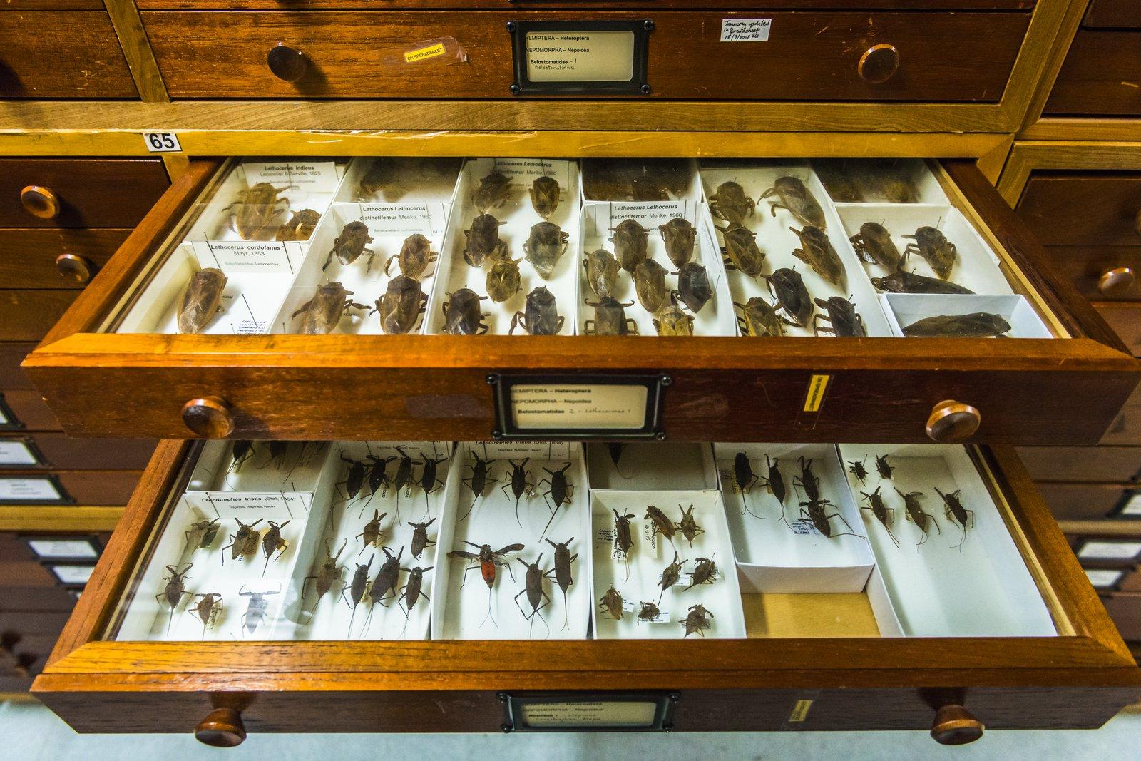 Entomology Collection Area