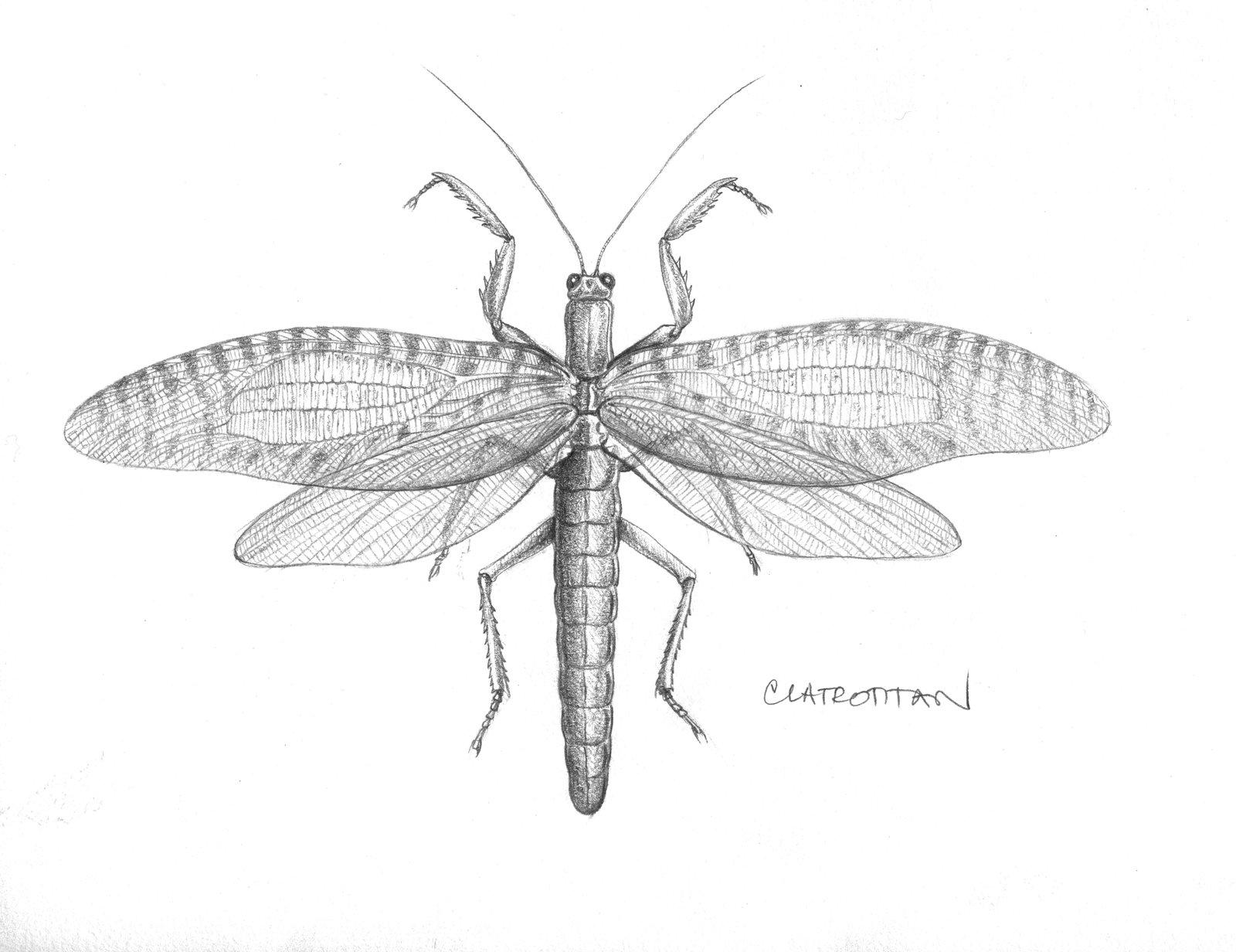 Illustration of clatrotitan andersoni