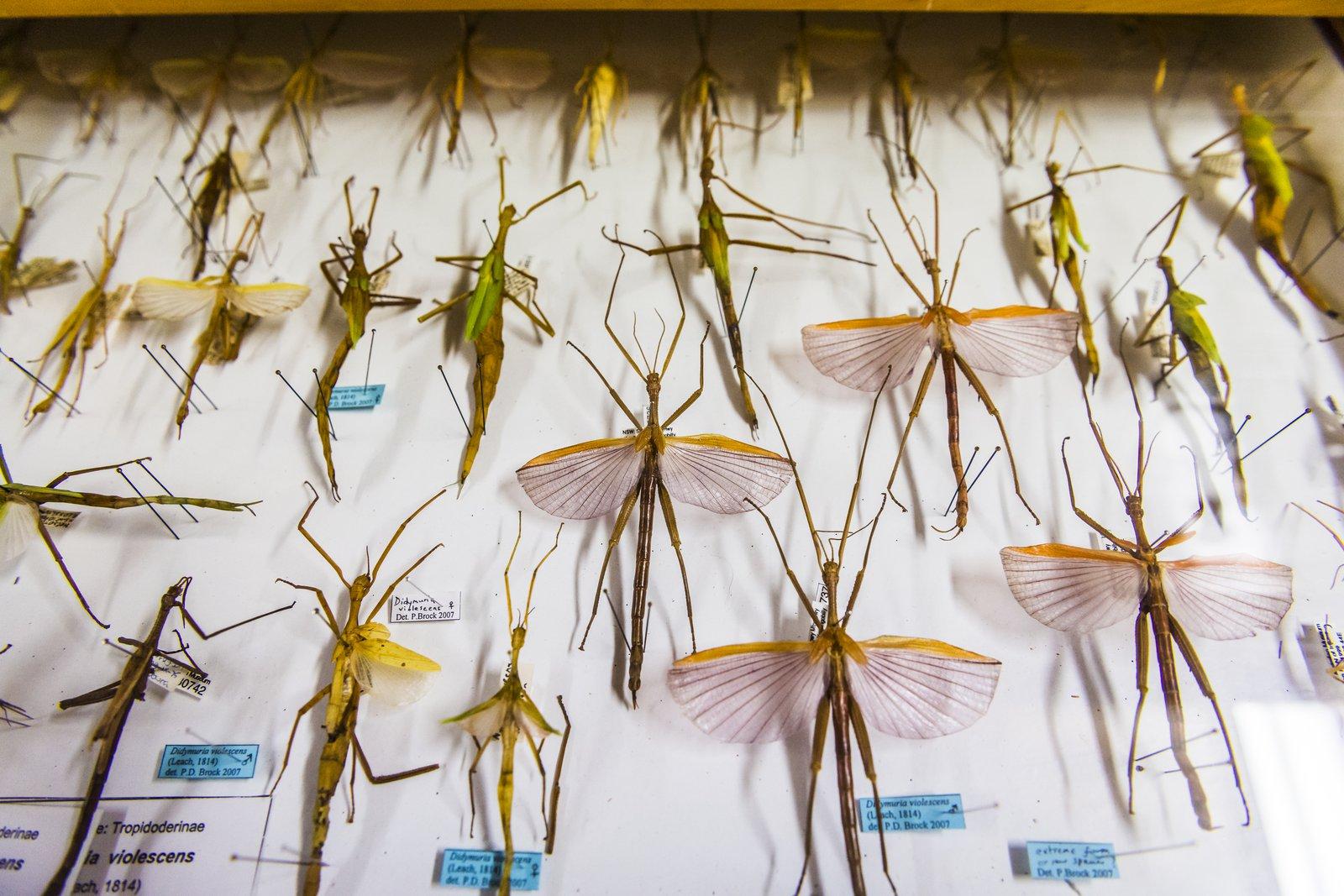 Entomology Collection Area 2018