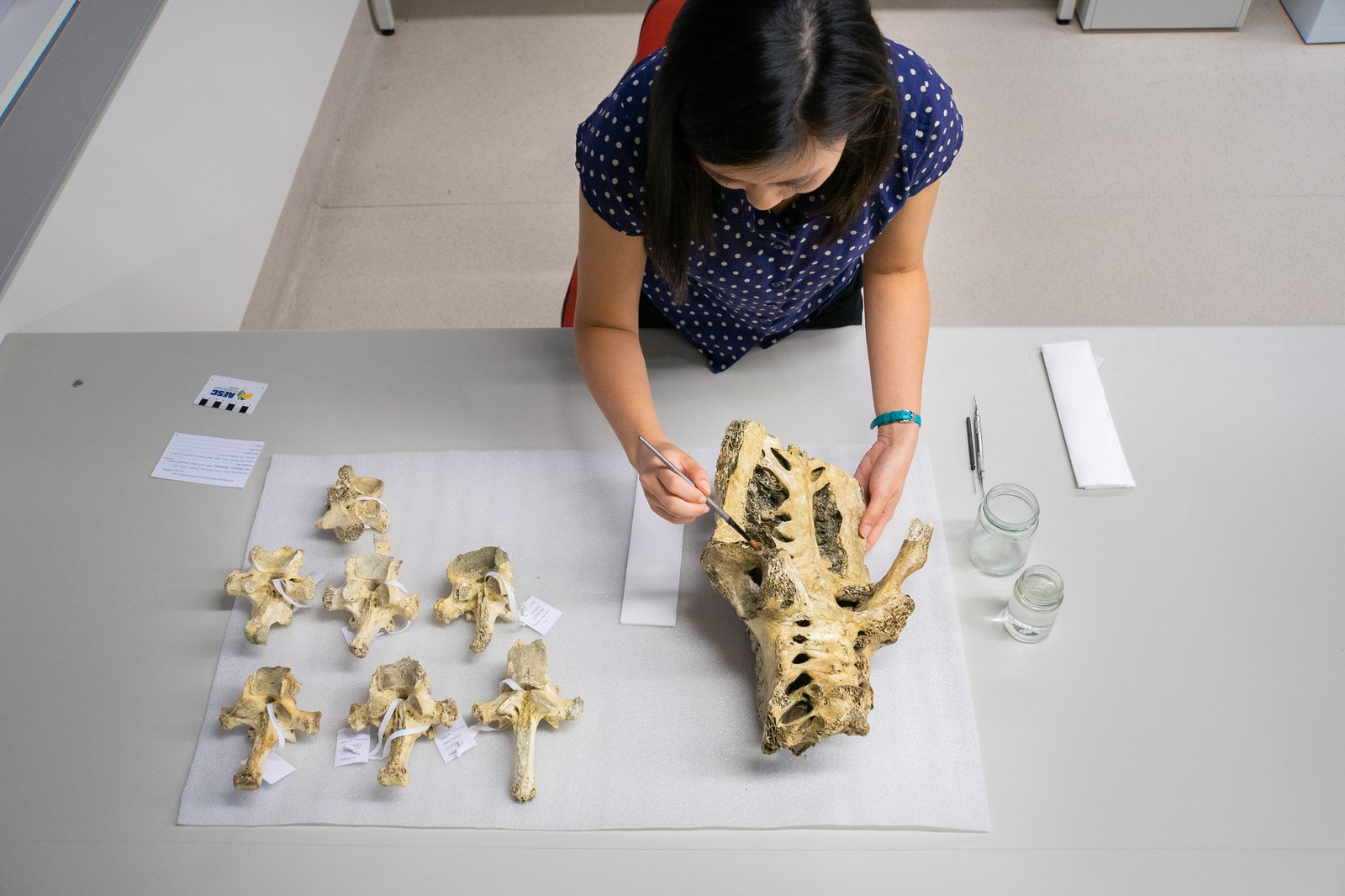 Jackie Nguyen and a Moa Skeleton