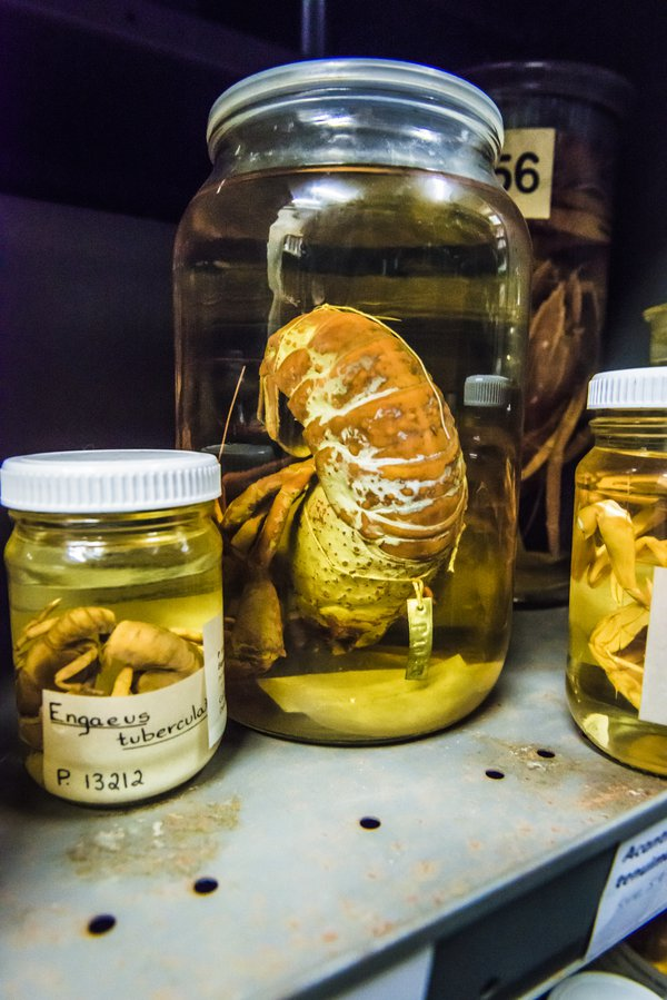 Marine Invertebrates Collection Area 2018