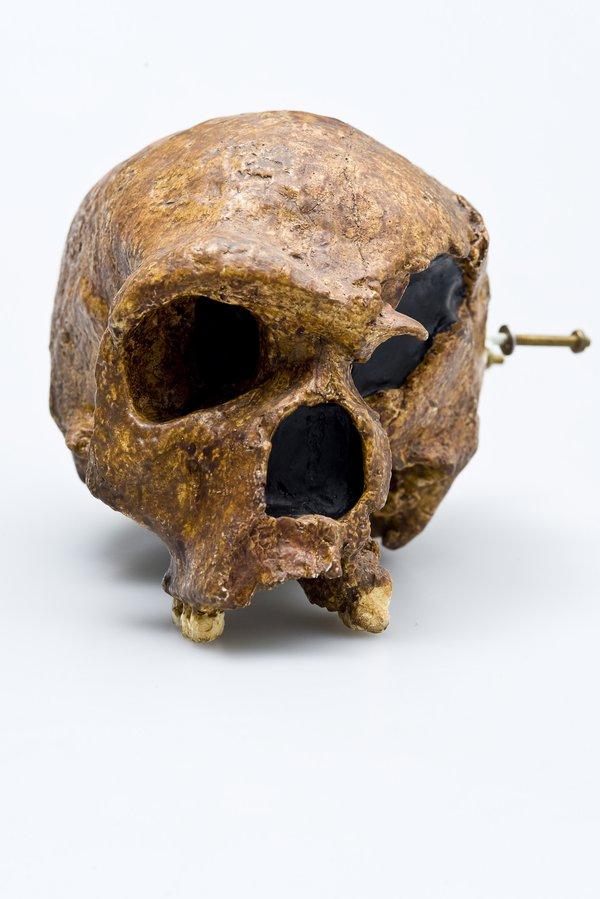 Steinheim skull