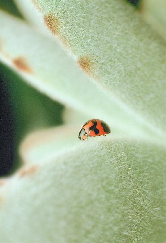 Ladybug on prickly cactus - Joel Flanagan