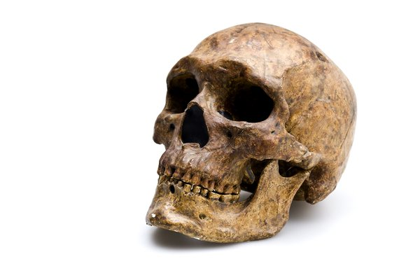 Homo Sapiens (skull & lower jaw) - Homo sapiens skull from Zhoukoudian angled view