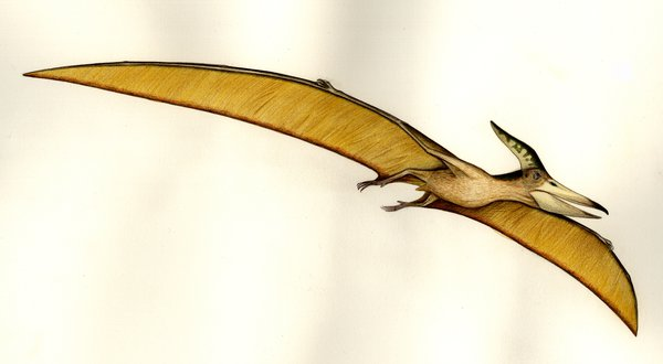 Illustration of pteranodon