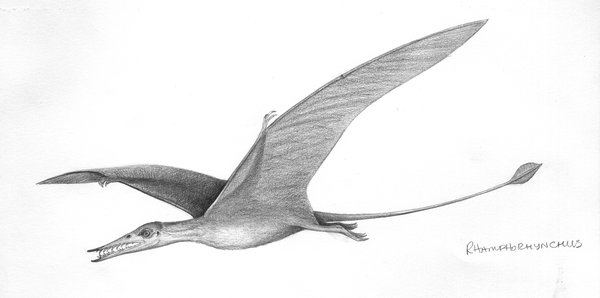 Illustration of pterosaur Rhamphorhynchus muensteri