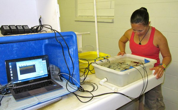 Life at Lizard: Goby garages