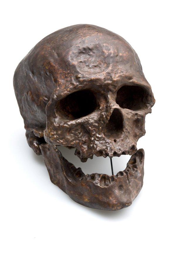 'Cro-magnon man' skull