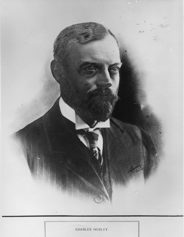 Charles Hedley
