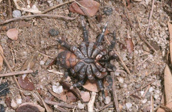 Segmented spider underneath