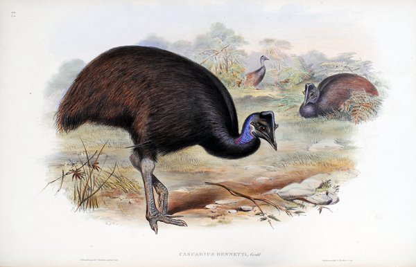 The birds of Australia. Supplement / by John Gould.