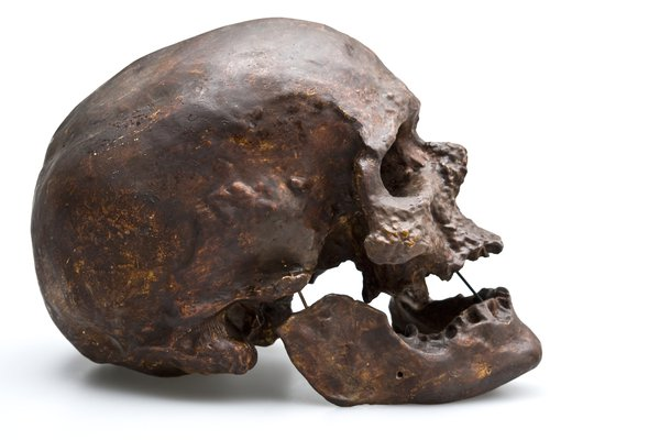 'Cro-magnum man' skull