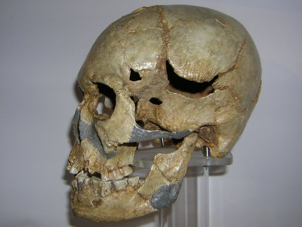 Skull cast of Homo sapiens Minatogawa 1