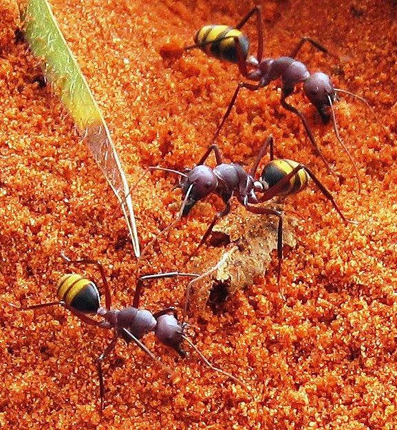 The Ants Pants - Elizabeth Sakker