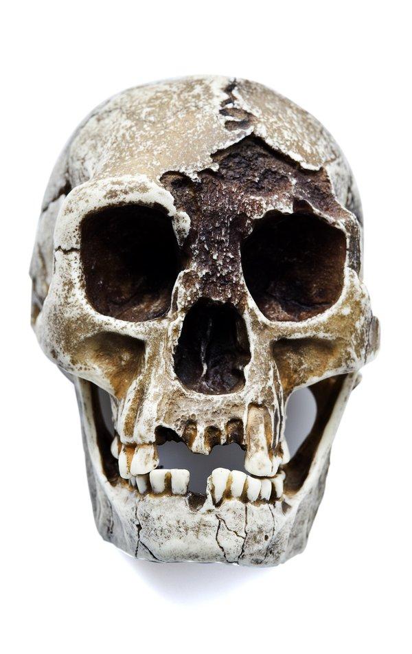 Homo floresiensis skull - Front view of skull