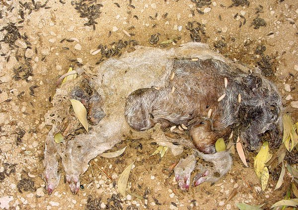 Decomposition of Pig