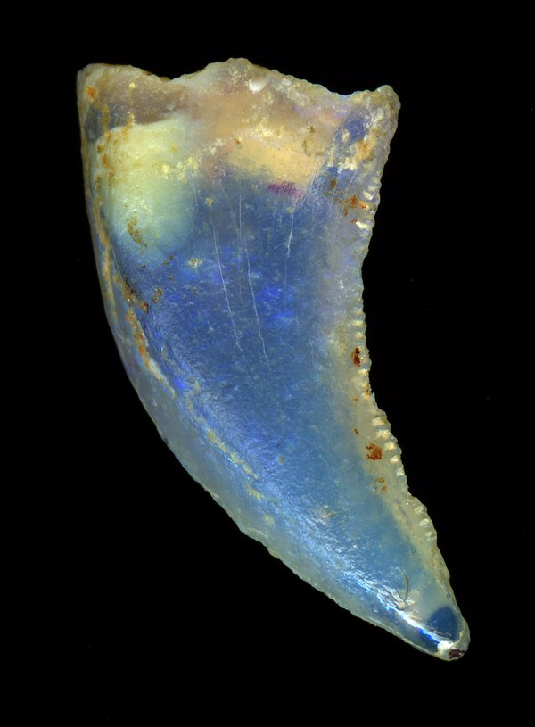 Opalised fossil  tooth