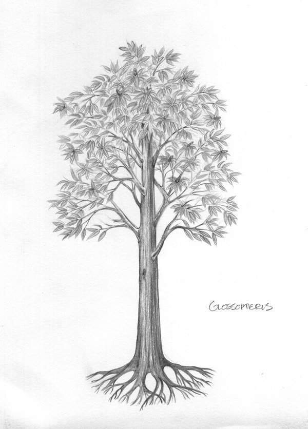 Illustration of glossopteris