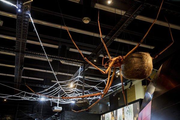 Spiders Exhibition Photograph Stock