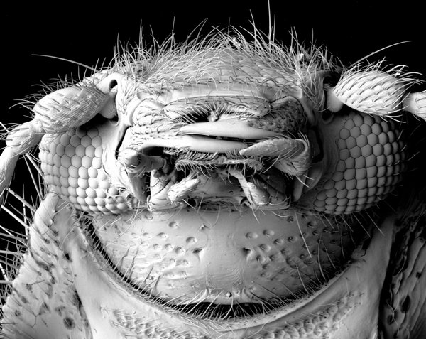 Mouth parts of a beetle