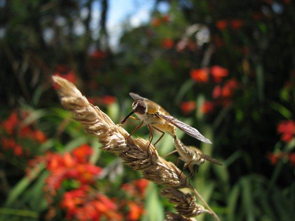 Flies - Ashley Brennan