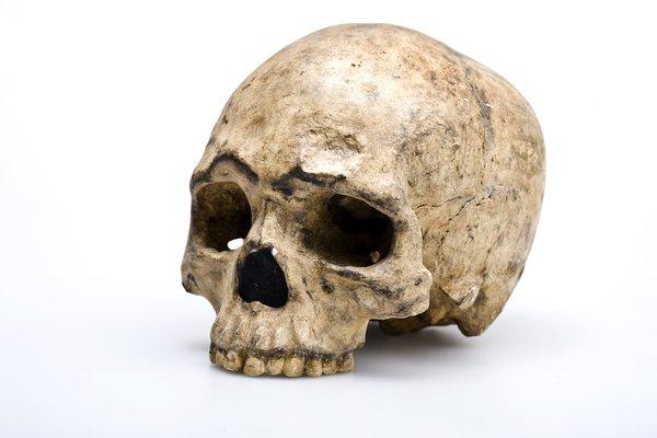 Liujiang Skull Homo sapiens angled view