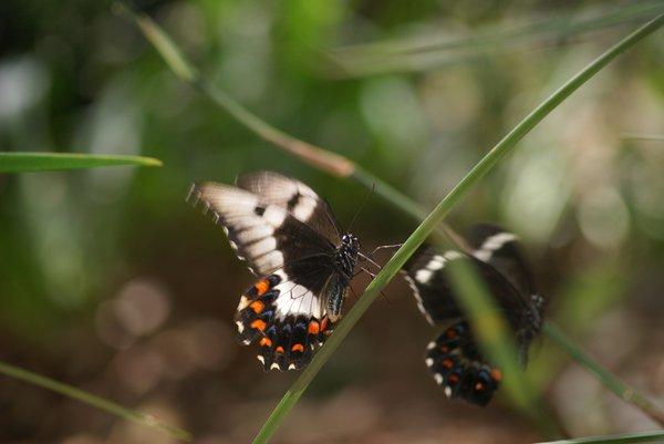 Butterfly Reflection - Olivia van Cuylenburg