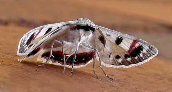 Moth Surprise - Anna Pha