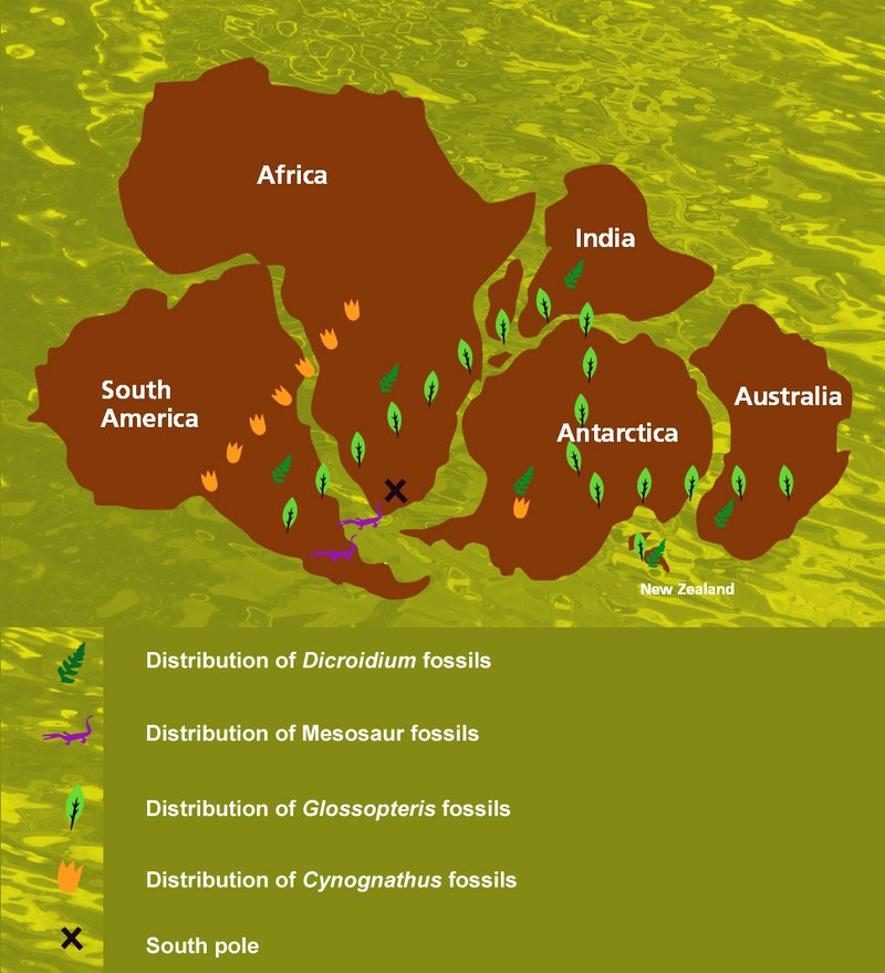 gondwana fossil map
