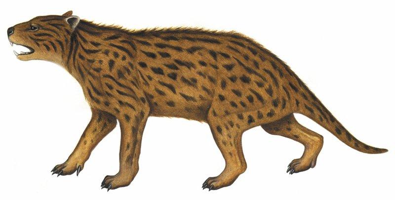 Australia's extinct animal, Wakaleo