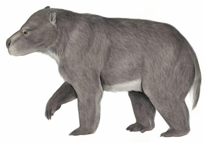 Australia's extinct animal, the Kolopsis