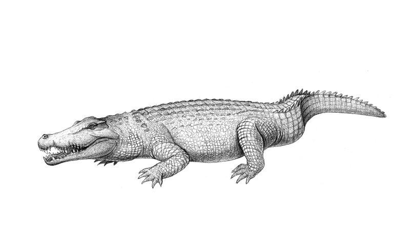 Australia's extinct crocodile, Baru darrowi