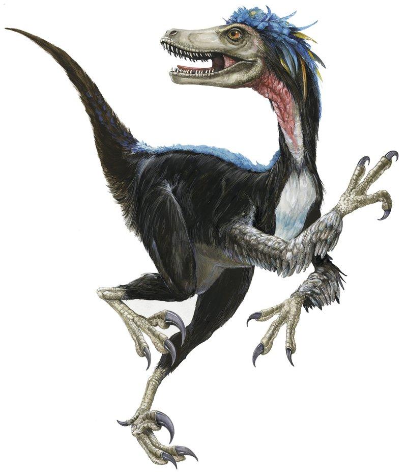 Dinosaur - Velociraptor mongoliensis