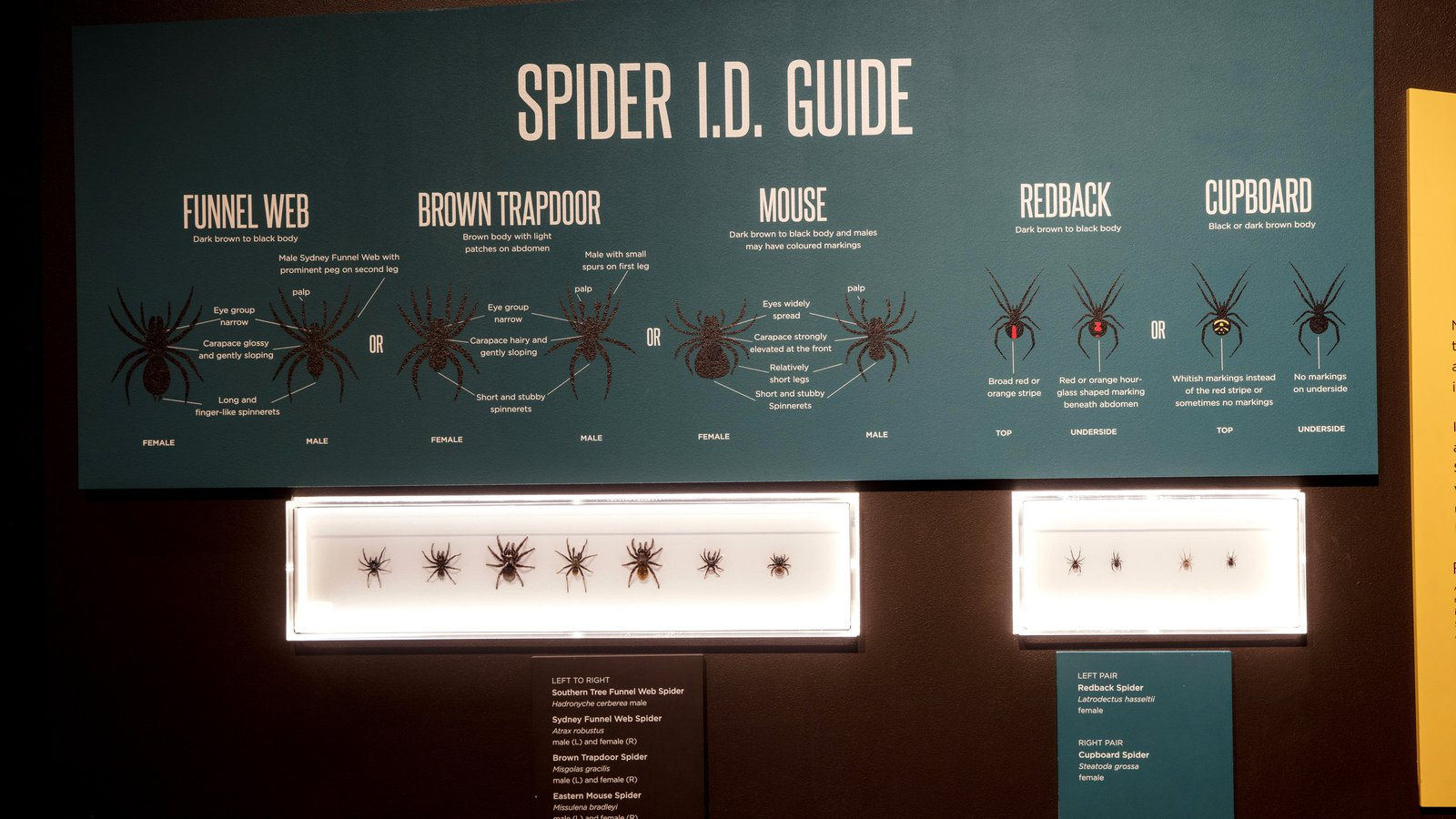 Spiders exhibition I.D. Guide display panel