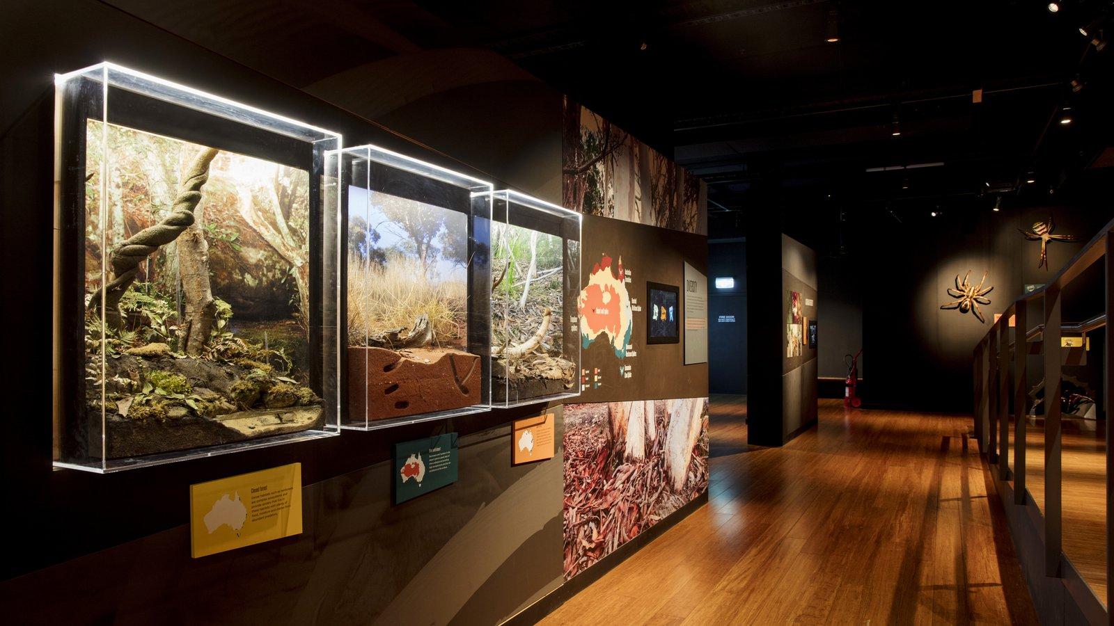 Spiders exhibition showcases