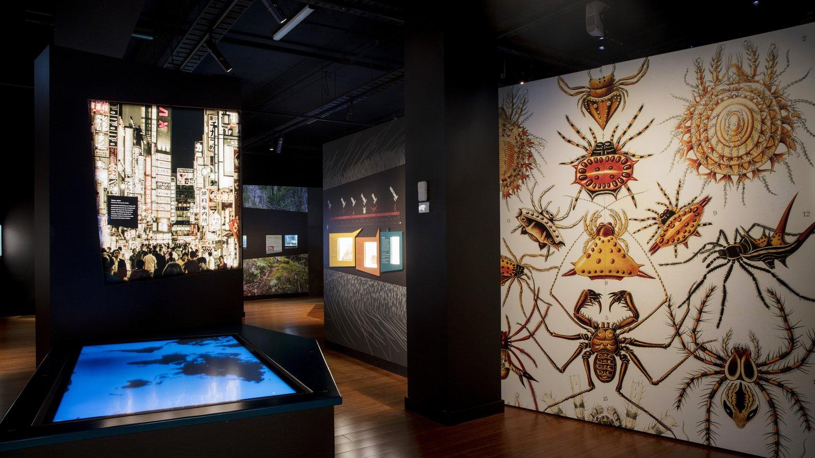 Spiders exhibition