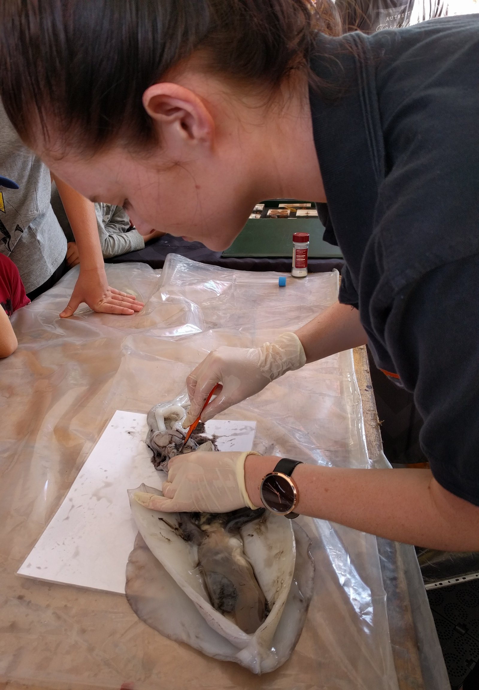 Squid Dissection - WSF